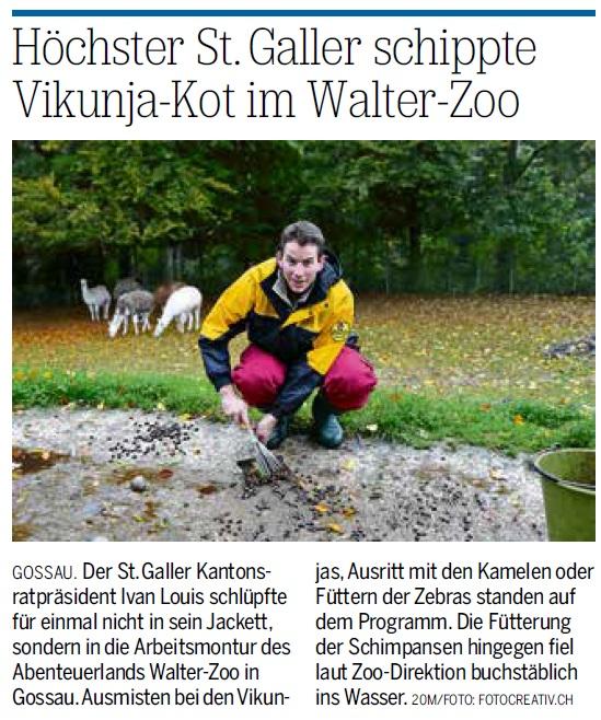 Höchster St. Galler schippte Vikunja-Kot im Walter-Zoo (Mittwoch, 11.10.2017)